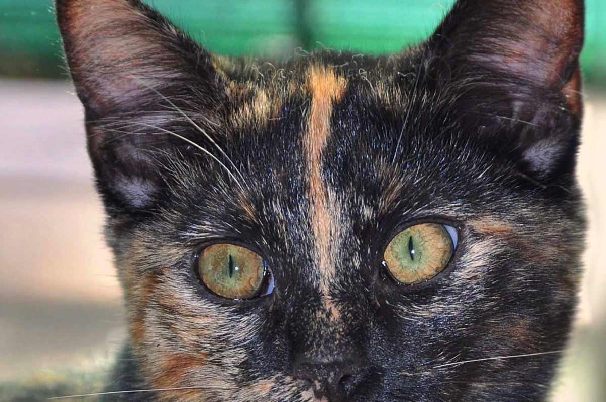 Katze-Augen-Foto