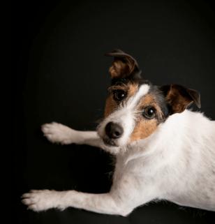 1.-Buch-Titel Hund