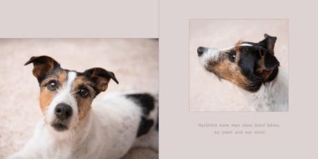 7.-Seiten-12-13 Hundebuch