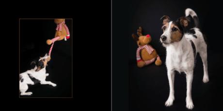 9.-Seiten-16-17 Hundebuch