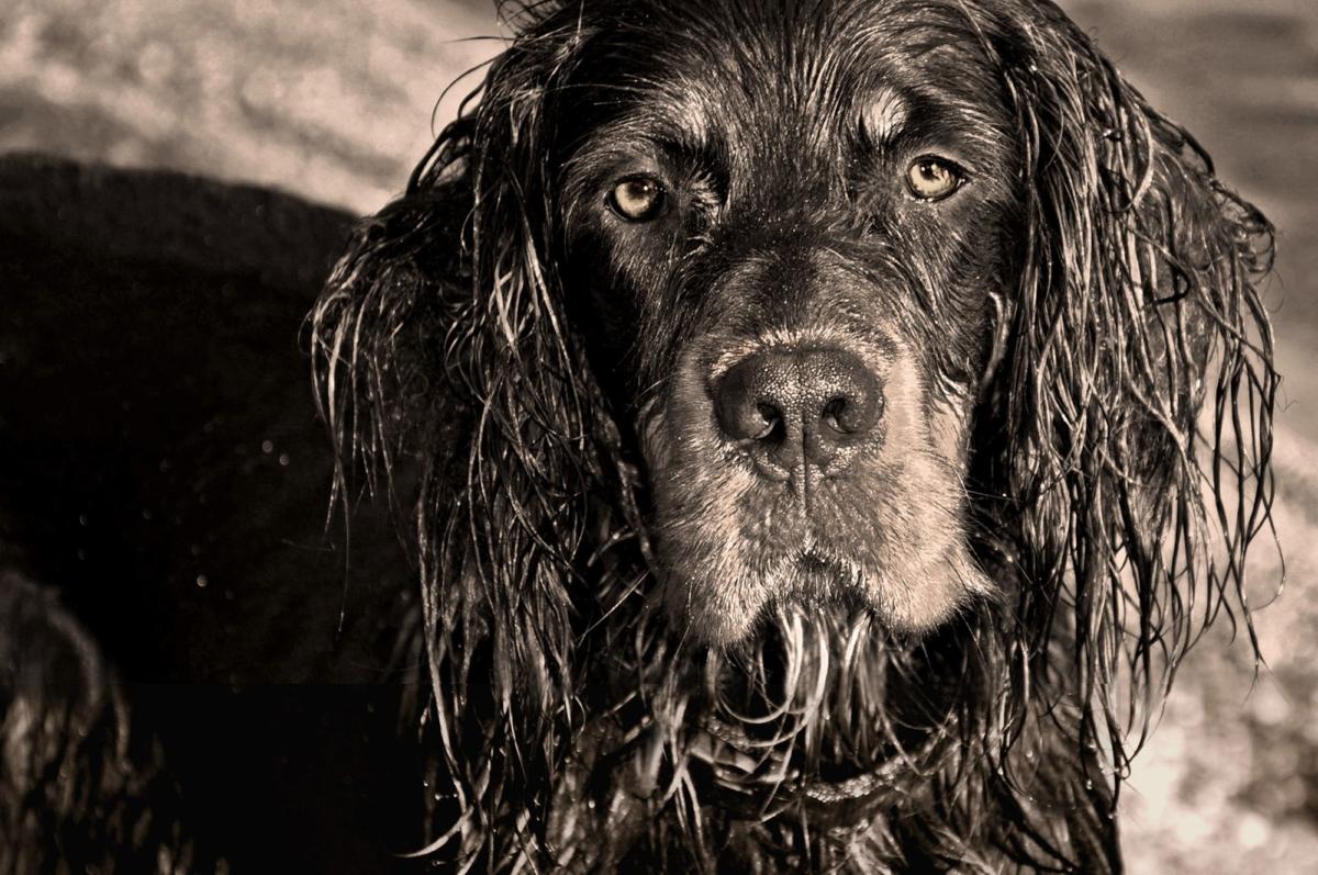 Fotografie Hunde Scharrer