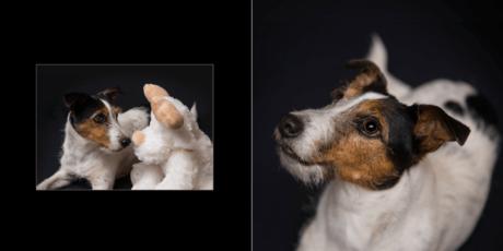 4.-Seiten-6-7 Hundebuch