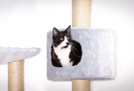 Katze-in-Kratzbaumhöhle