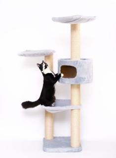 Katze-klettert-am-Kratzbaum