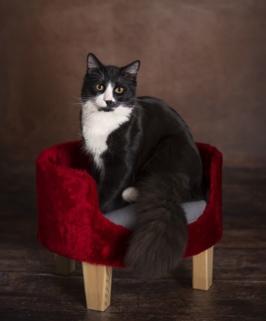 Katzensessel mit Katze