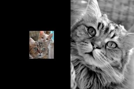 Tierfotografie Katzen wuppertal