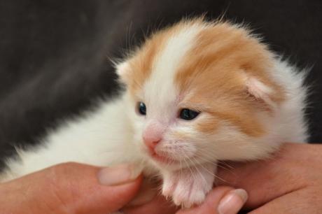 Tierfotografie mobil Katzenbaby